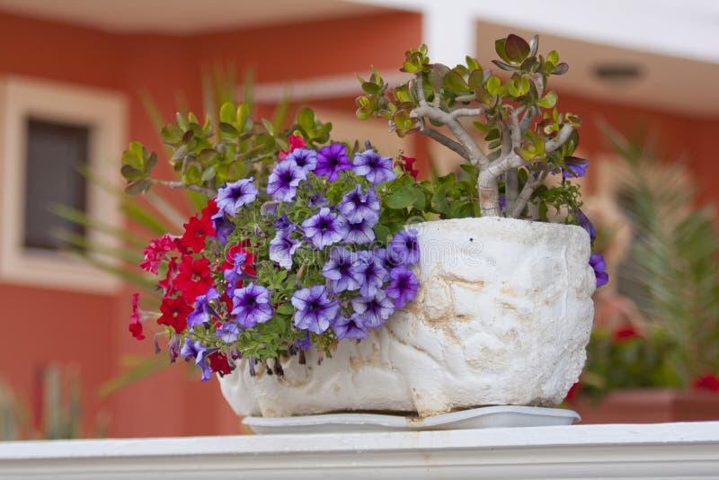 Jardiniere - con la petunia variopinta fotografia stock libera da diritti