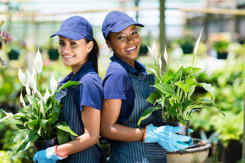 Jardiniers en serre chaude photographie stock