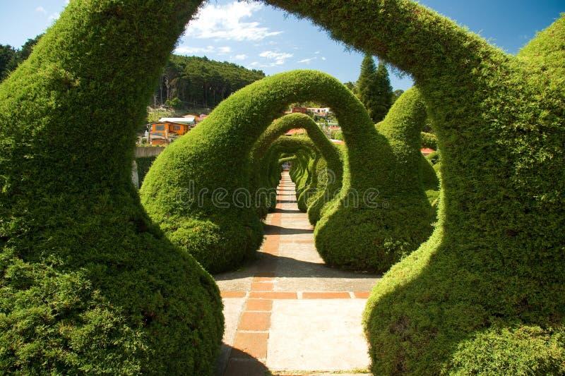 Jardin sculpté en le Costa Rica photos libres de droits