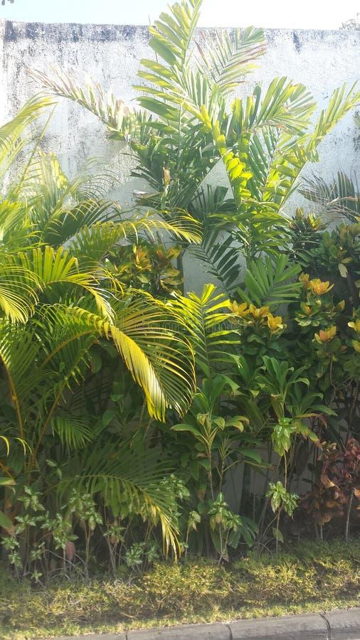 jardins imagem de stock royalty free