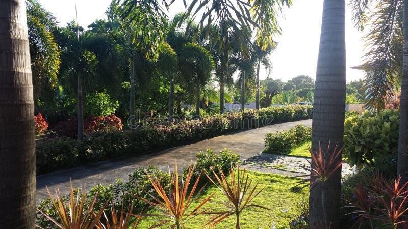 jardins photo stock