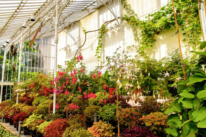 Jardins botânicos belfast fotografia de stock royalty free