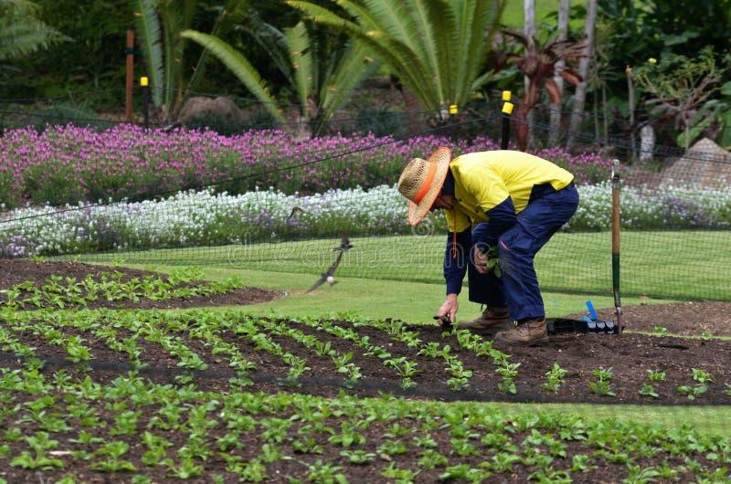 Jardins botânicos da cidade de Brisbane fotos de stock