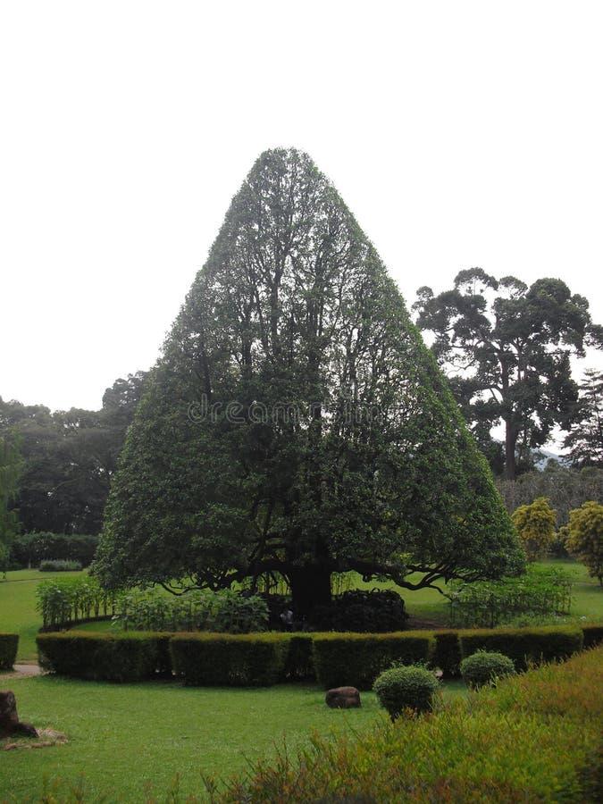 Jardins botânicos de Peradeniya de Sri Lanka fotos de stock