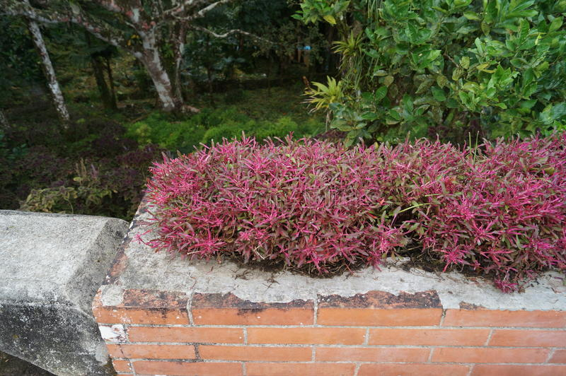 Jardins botânicos de Puerto Plata imagens de stock royalty free