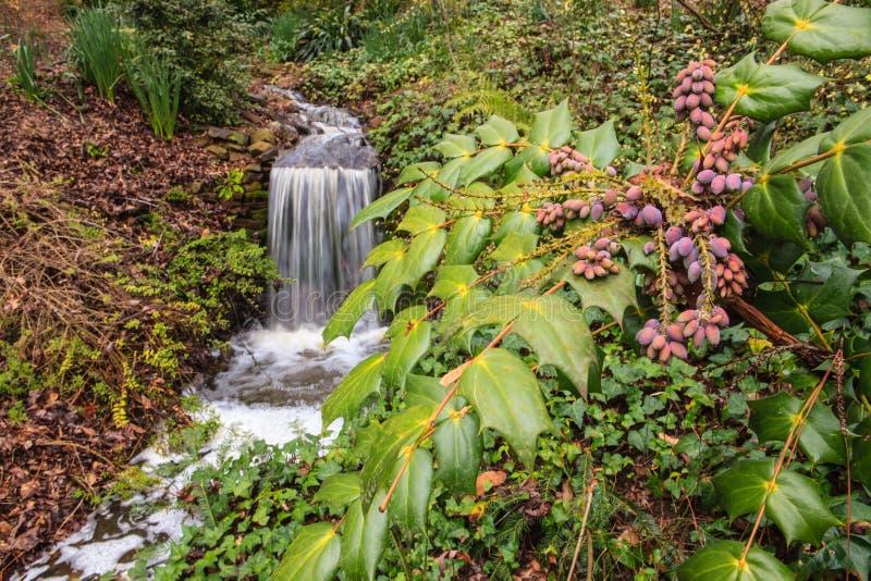 Jardins botânicos do SC de Clemson imagens de stock