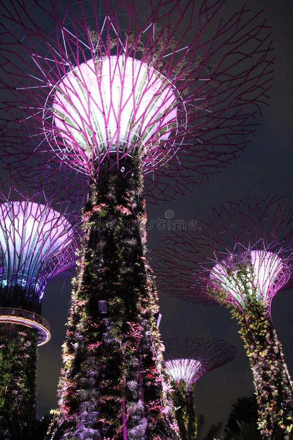 Jardins Botânicos Iluminados pela Baía de Singapura fotos de stock royalty free