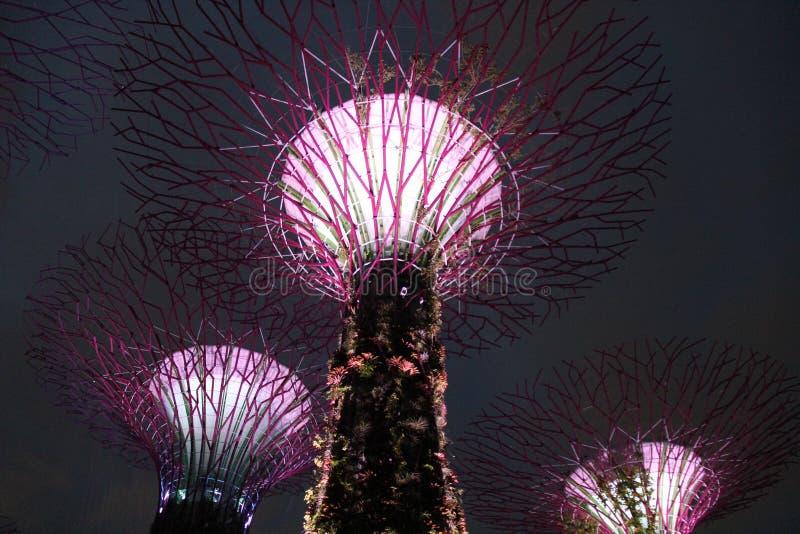 Jardins Botânicos Iluminados pela Baía de Singapura imagem de stock royalty free