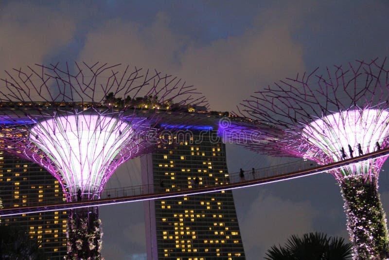 Jardins Botânicos Iluminados pela Baía de Singapura imagem de stock