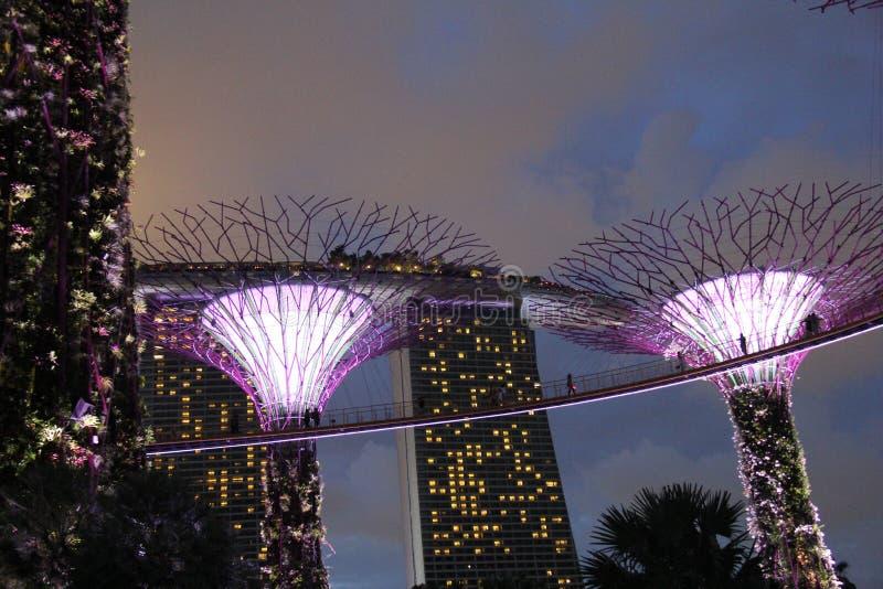 Jardins Botânicos Iluminados pela Baía de Singapura imagens de stock