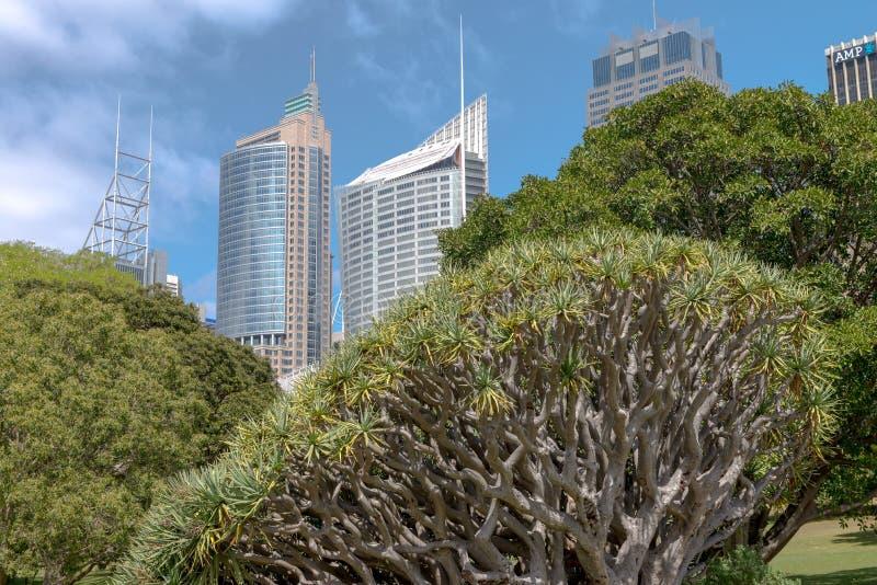 Jardins botânicos reais inverno, Sydney Australia imagem de stock