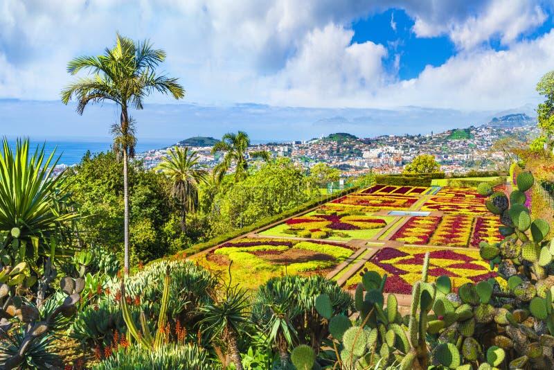 Jardins botânicos tropicais em Funchal, ilha de Madeira, Portugal imagem de stock