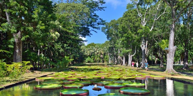 Jardins botaniques de Pamplemousess en Îles Maurice images libres de droits