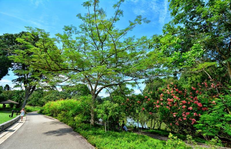 Jardins botaniques de Singapour, Marina Bay, Singapour photos libres de droits