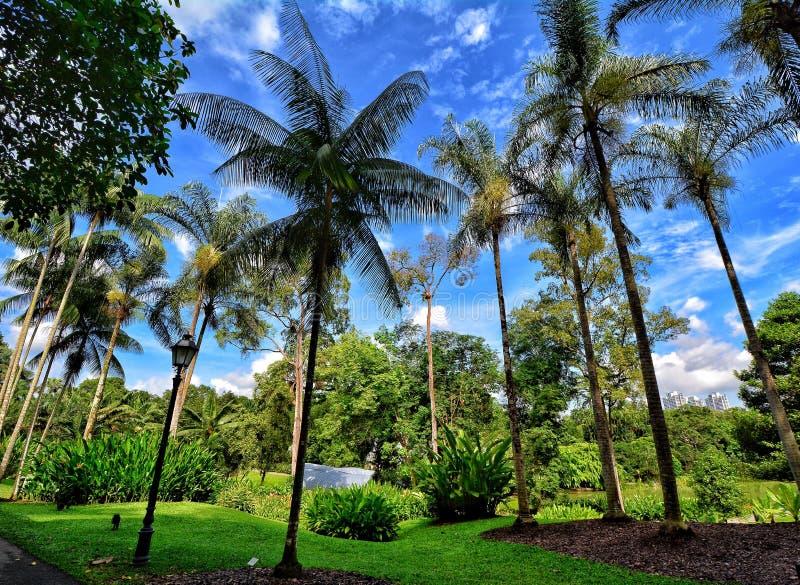 Jardins botaniques de Singapour, Marina Bay, Singapour images libres de droits
