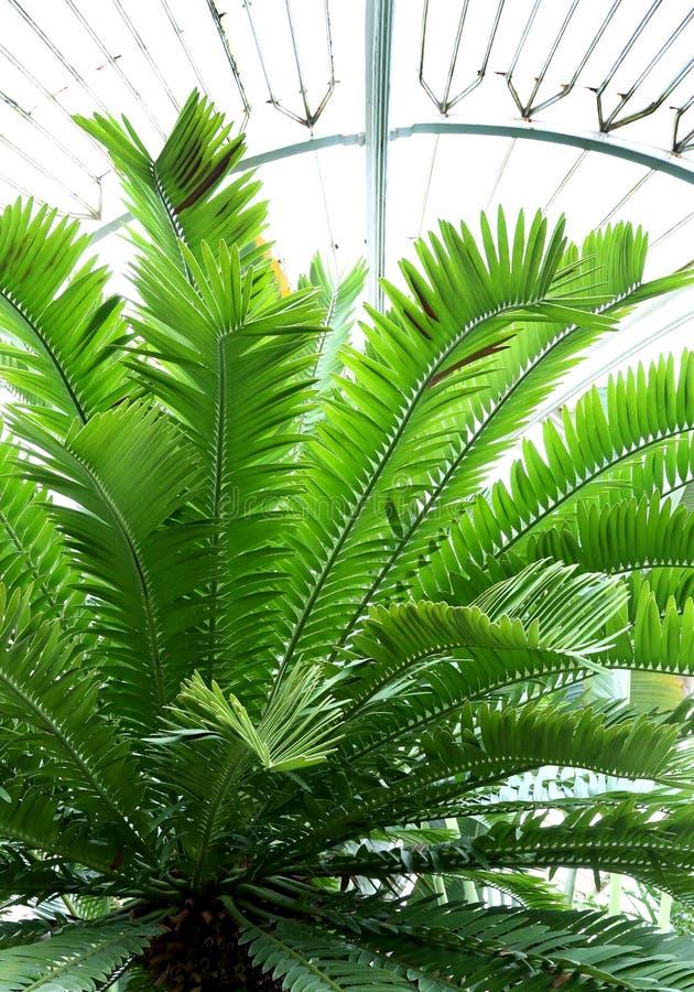 Jardins botaniques royaux de Kew, site d'héritage de l'UNESCO, Kew Londres occidentale, jardins botaniques photographie stock libre de droits