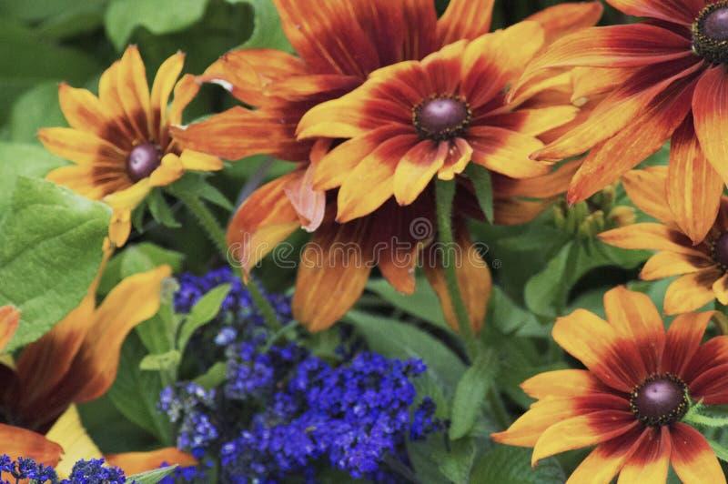 Jardins coloridos imagens de stock