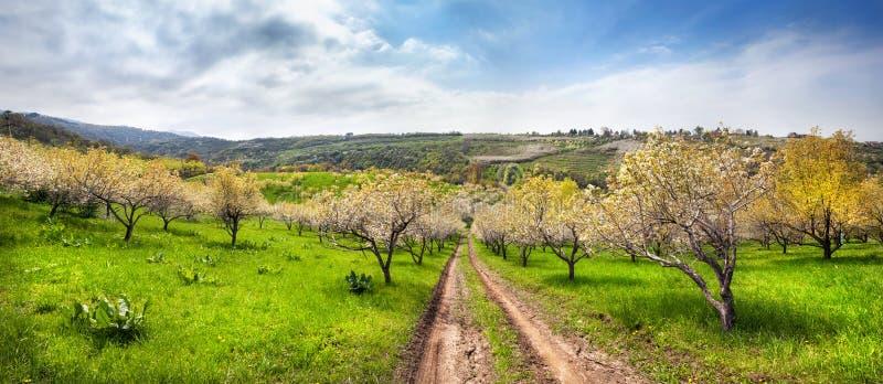 Jardins d'Apple de ressort photo stock