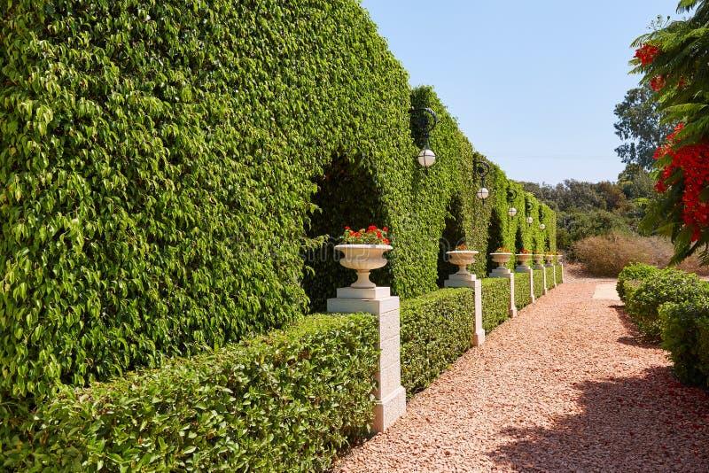 Jardins de Bahai, le mur des raisins sauvages avec des pots de fleurs photo libre de droits