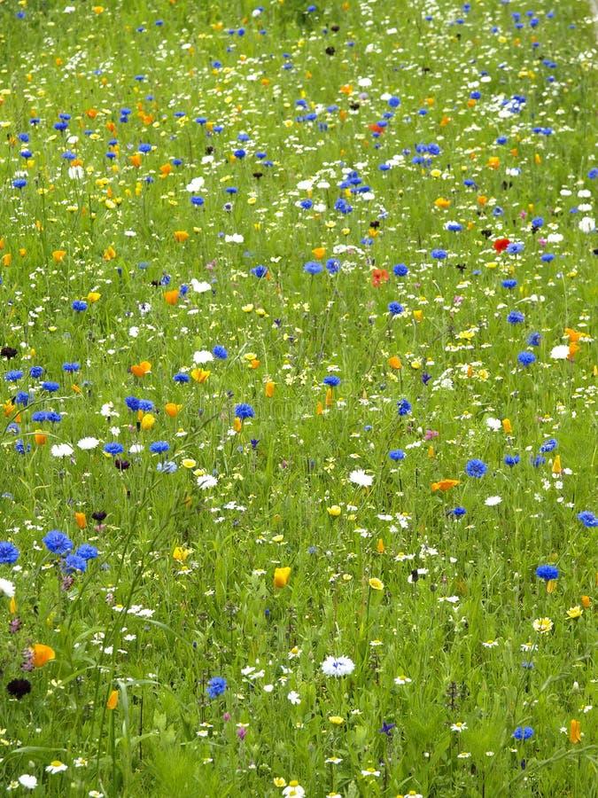 Jardins de brittany photographie stock libre de droits