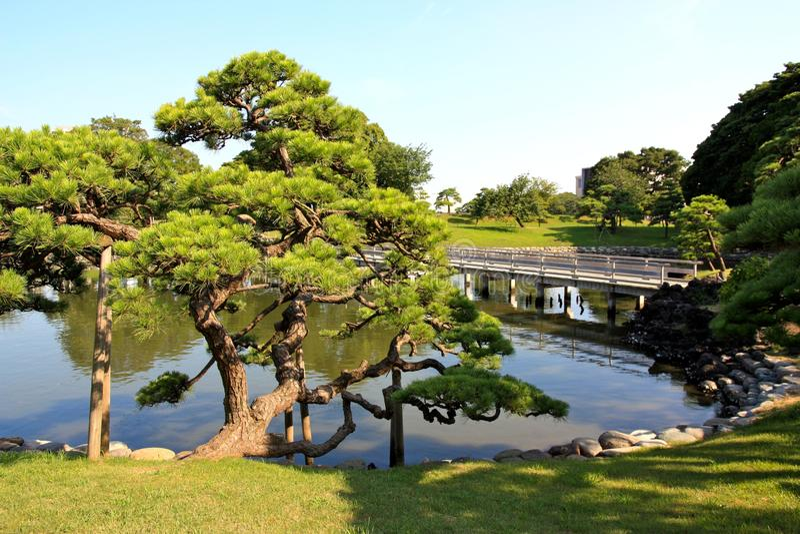 Jardins de Hamarikyu à Tokyo, Japon images stock