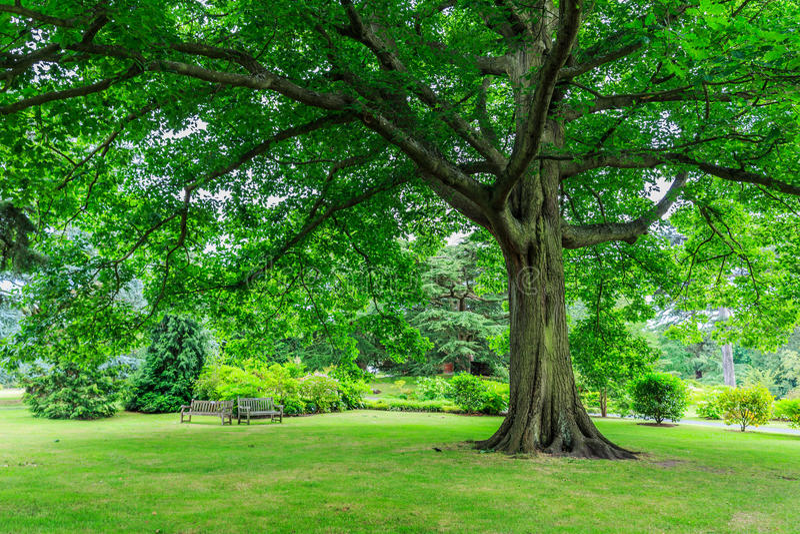 Jardins de Kew, Angleterre photos libres de droits