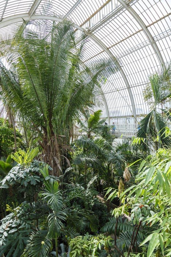 Jardins de Kew da casa de palma imagem de stock royalty free
