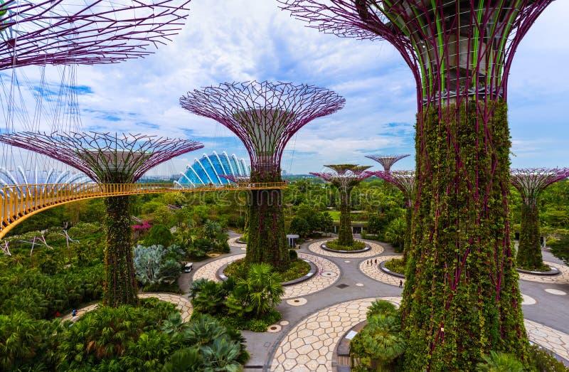 Jardins de parc par la baie - Singapour image libre de droits