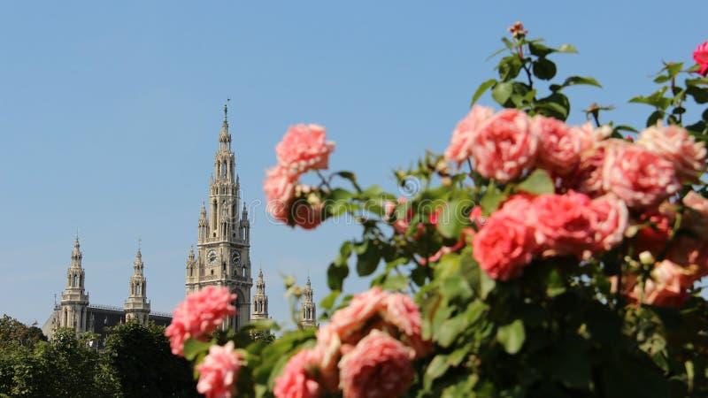 Jardins de rosas e construções históricas Salão de cidade em Viena imagem de stock