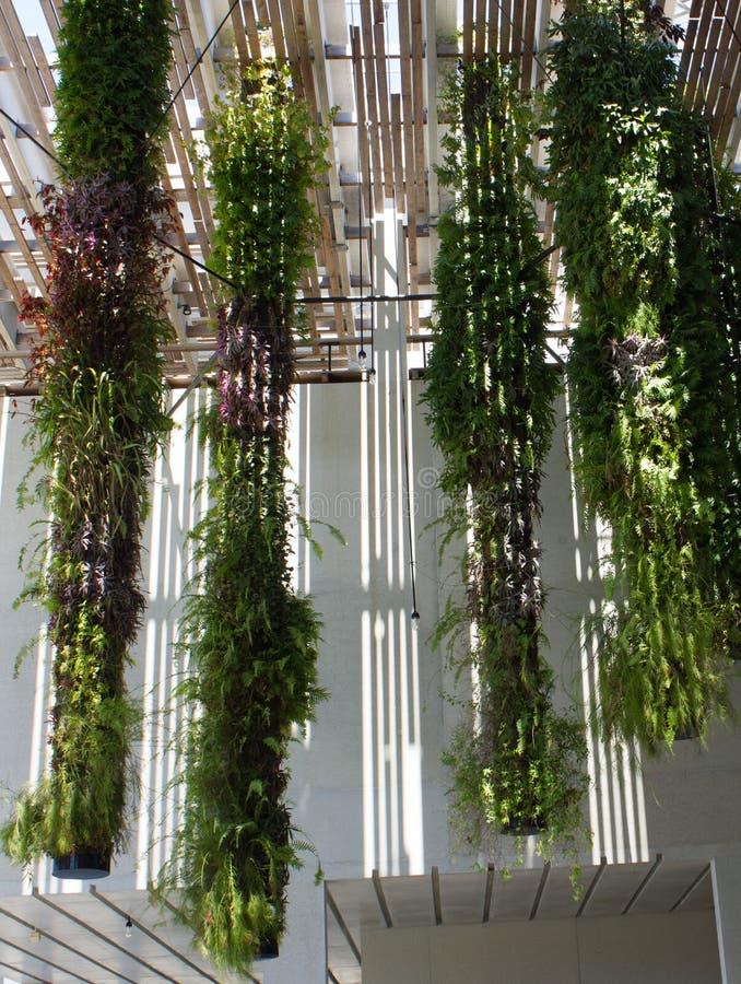 Jardins de suspensão em Perez Art Museum em Miami fotos de stock royalty free