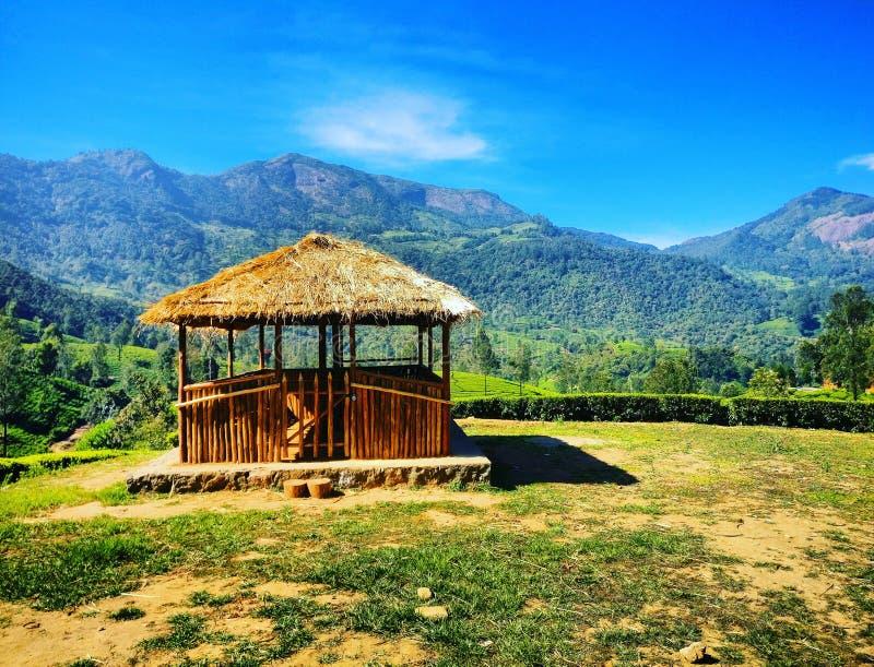 Jardins de thé photographie stock libre de droits