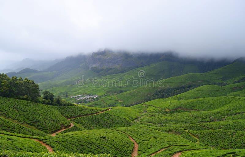 Jardins de thé au-dessus de Misty Mountains dans Kolukkumalai, Munnar, Kerala, Inde image libre de droits