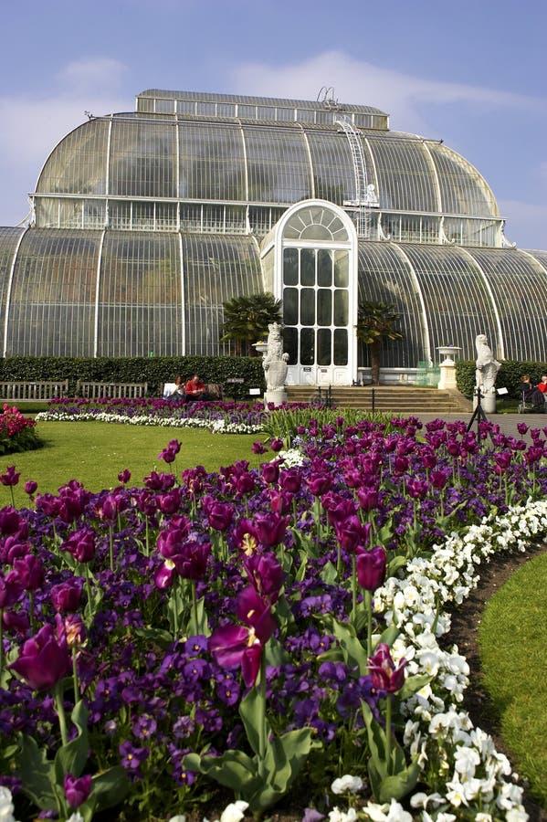 Jardins Londres Reino Unido do kew da casa de palma fotografia de stock royalty free