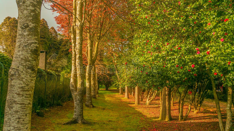 Jardins merveilleux de Madère photos stock