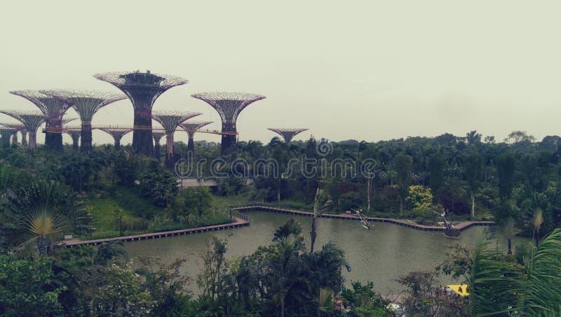 Jardins par la baie, Singapour photographie stock libre de droits