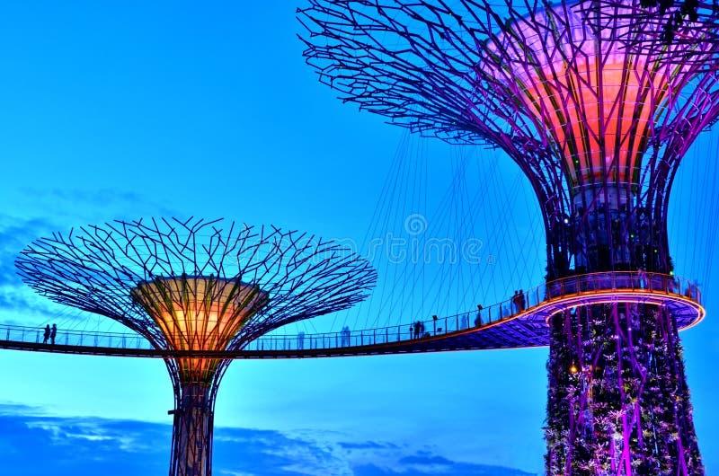 Jardins par la baie Supertrees, Singapour photographie stock