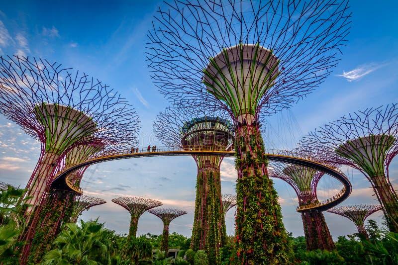 Jardins par le compartiment Singapour photos libres de droits