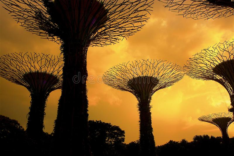 Jardins pela baía - jardins botânicos em Singapura imagens de stock