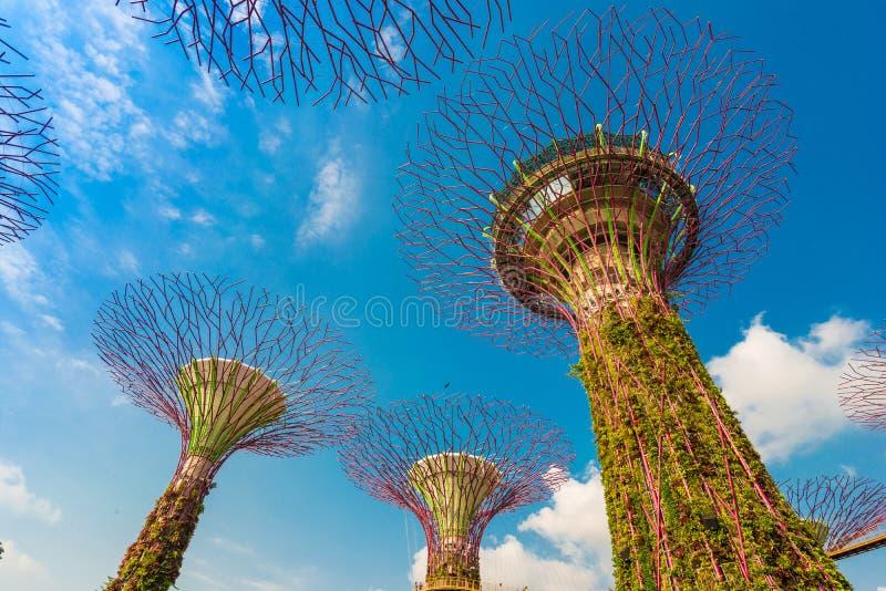 Jardins pelo louro em Singapore imagem de stock royalty free