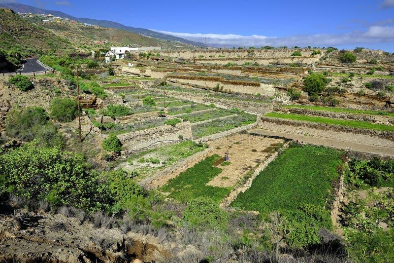 Jardins pisados fotos de stock royalty free