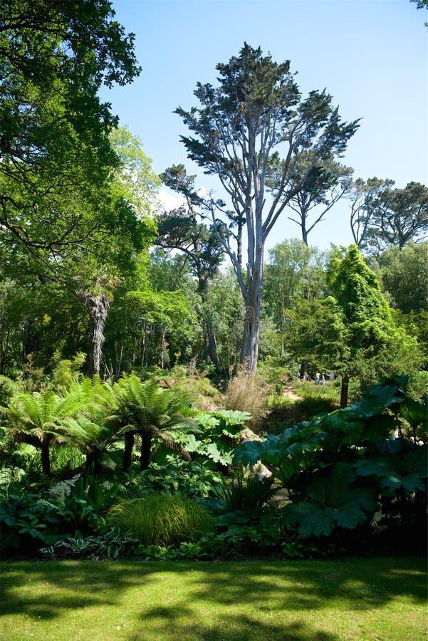 Jardins tropicais Dorset Reino Unido de Abbottbury fotografia de stock royalty free
