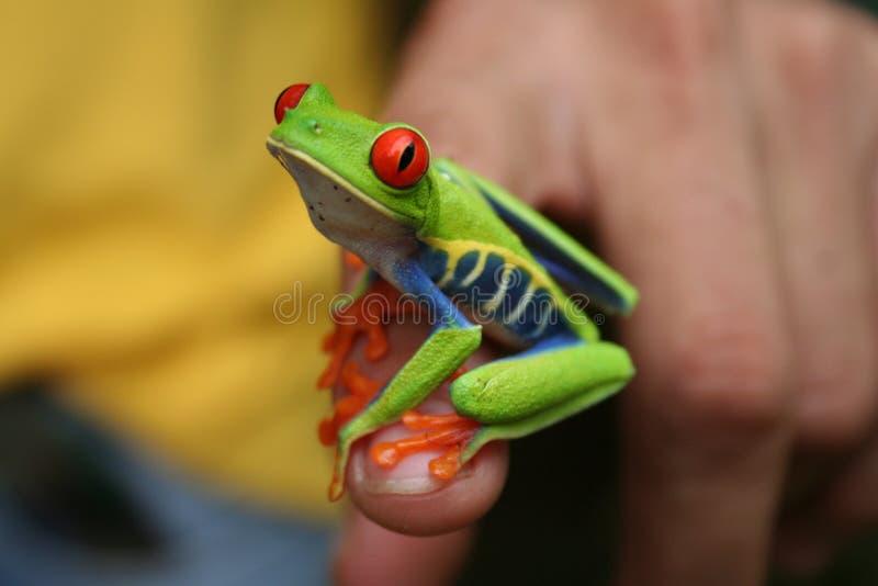 jarmarczny żaba liść fotografia royalty free