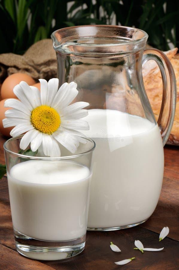 Jarra de leche con la margarita fotografía de archivo libre de regalías