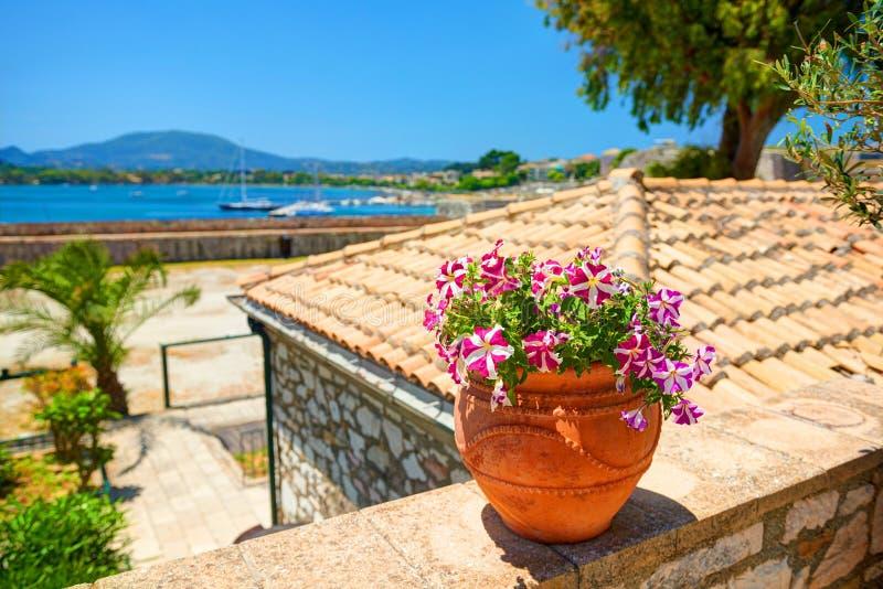 Jarro de la arcilla con las flores magentas en la pared de piedra Yates clásicos en el mar Mediterráneo Castillo de Kerkyra Viaje fotografía de archivo libre de regalías