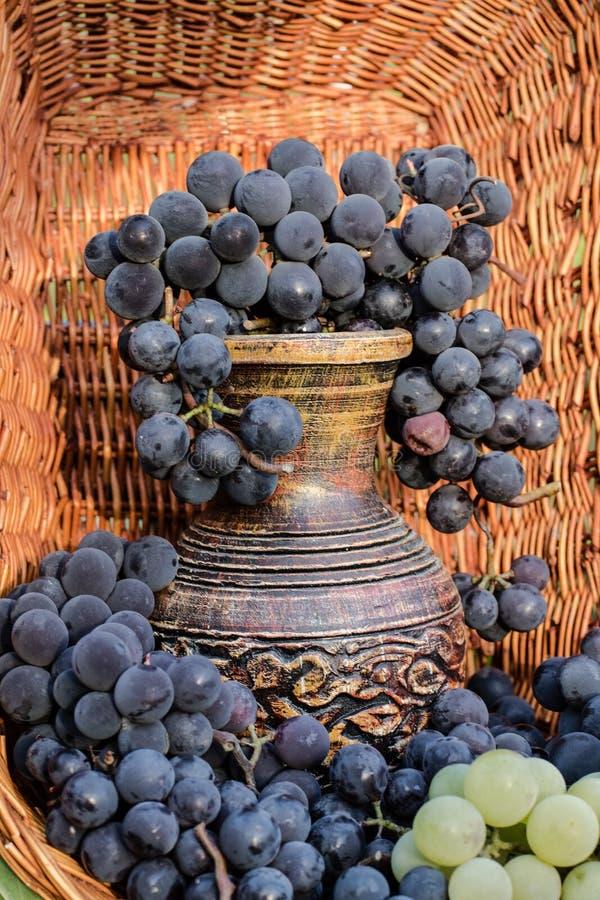 Jarro velho do vinho da argila cercado por grupos pretos da uva fotos de stock royalty free