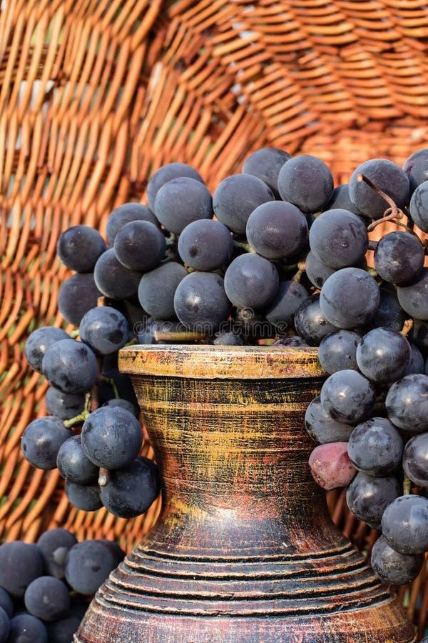 Jarro velho do vinho da argila cercado por grupos pretos da uva foto de stock royalty free