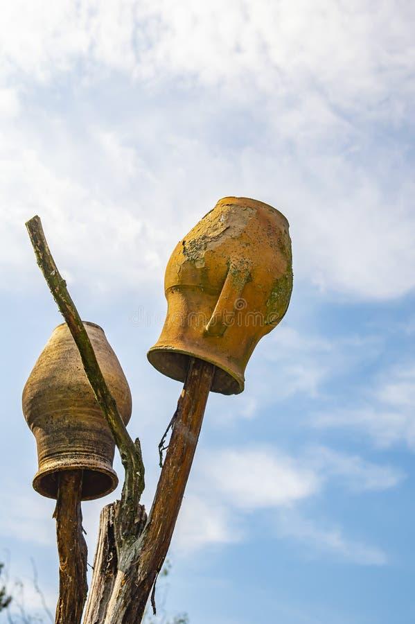 Jarros da argila nos ramos de uma árvore seca foto de stock royalty free
