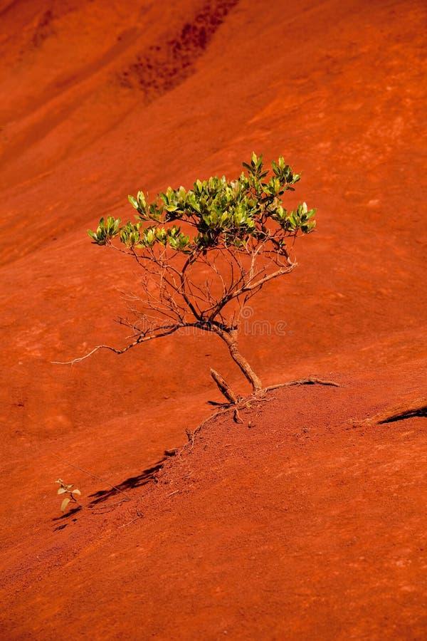 jaru waimea zielony drzewny obraz stock