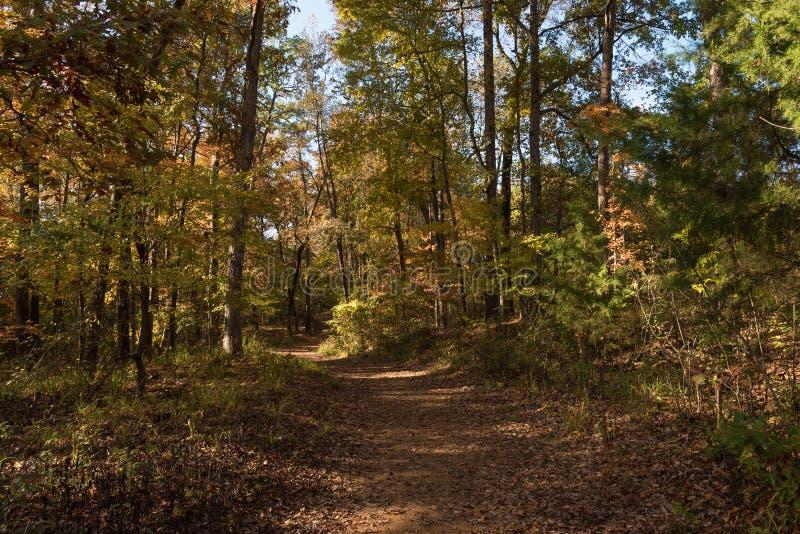 Jarzębata las ścieżka w Wczesnej jesieni obrazy royalty free