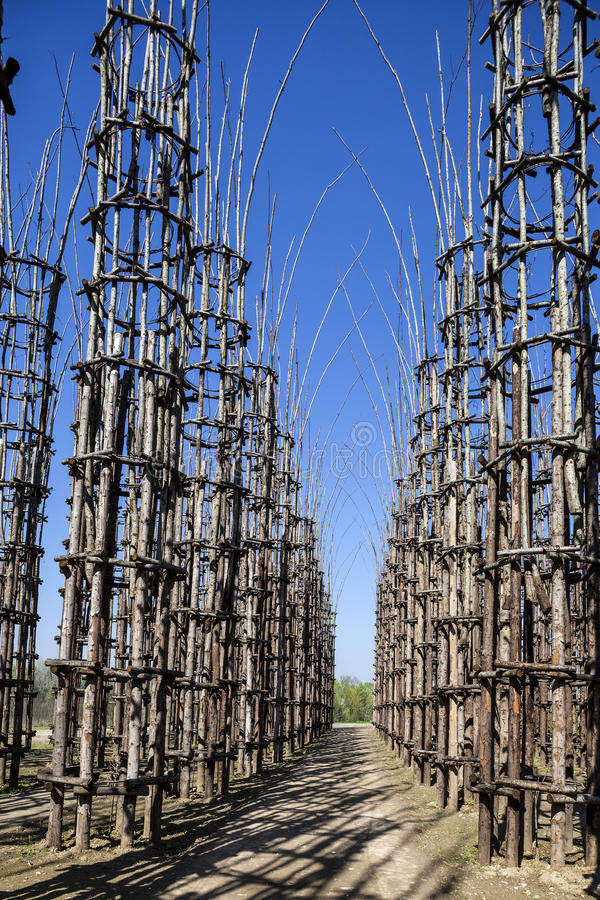 Jarzynowa katedra w Lodi, Włochy, robić up 108 drewnianych kolumn wśród których zasadzał dębowy drzewo zdjęcie royalty free